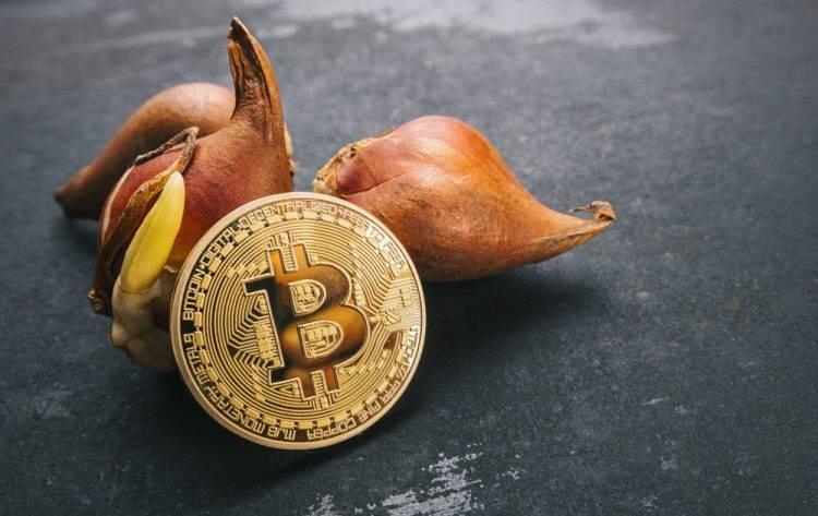 bitcoin, tulip mania